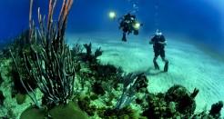 קורס צלילה סקובה דייבר PADI Scuba Diver