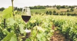 סיורי יקבים מקפריסין – לאוהבי היין מביניכם